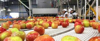 Упаковка фруктов